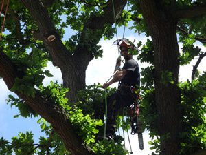 Tree Pruning in Sevenoaks & Tunbridge Wells