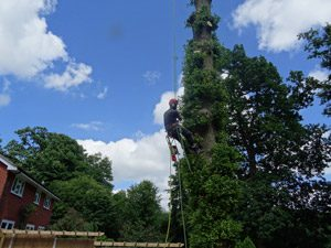 Tree Care Sevenoaks & Tunbridge Wells