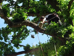 Tree Specialists Sevenoaks & Tunbridge Wells