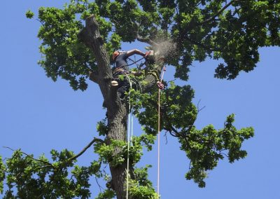 Tree surgery in domestic property in Maidstone Kent