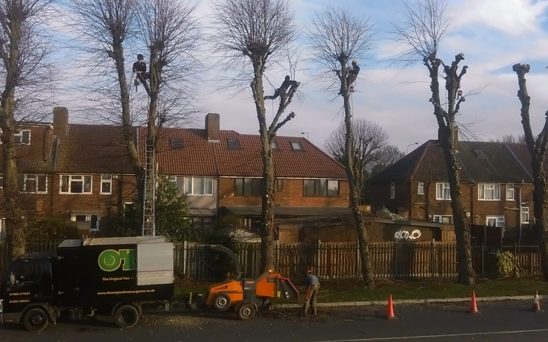 Tree surgery for Barking & Dagenham Council