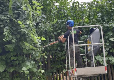 Hedge Trimming LBBD